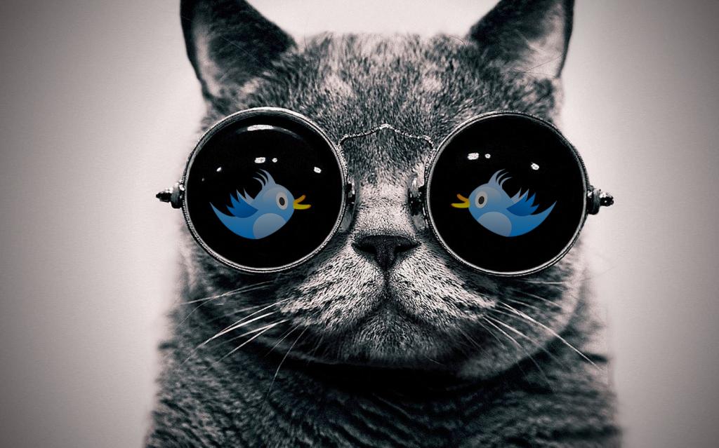 chat-lunettes-soleiltwit